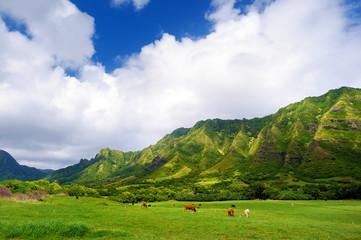 Cliffs and cows of Kualoa Ranch, Oahu