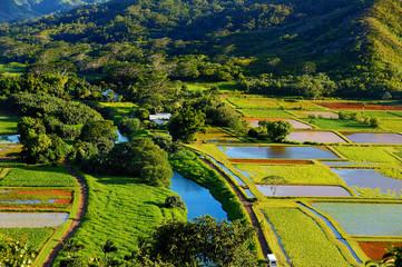 Taro fields in beautiful Hanalei Valley