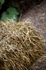 Bale of hay in a garden