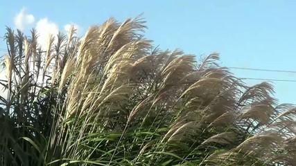Gras bewegt sich im Wind