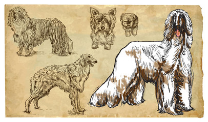 Animals, theme: DOGS (as a national treasure) - vector pack