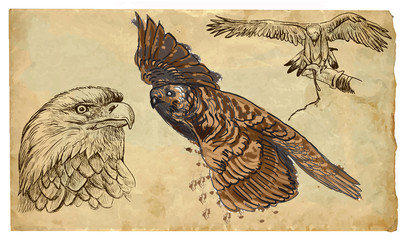 Animals, theme: BIRDS OF PREY - hand drawn vector pack