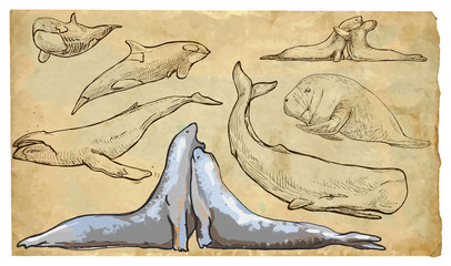 Animals, theme: SEA MAMMALS - hand drawn vector pack