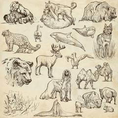 Animals around the world (set no.10) - Hand drawn illustrations