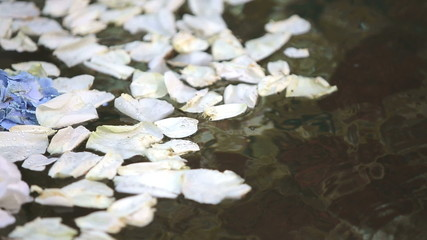 Flower petals in the water in the lake