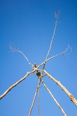 Dead twigs