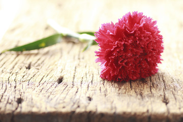 Flowers on brown wooden backgrond - Stock Image