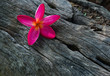 canvas print picture - flower on dead wood