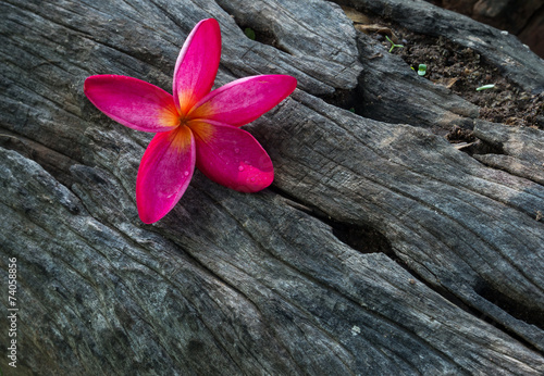 canvas print picture flower on dead wood