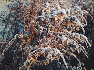 хрусткий мороз
