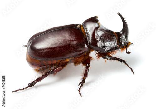 Deurstickers Neushoorn Rhinoceros beetle