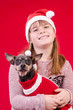 Child girl and dog in Christmas colors