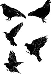 five black sketches of doves