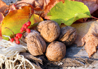 Close up of walnuts