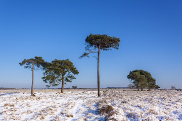 New Forest Trees in Snow