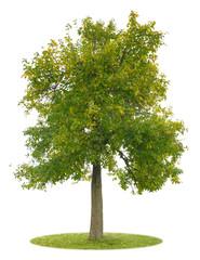 Freigestelleter Apfelbaum mit bunten Blättern im Herbst