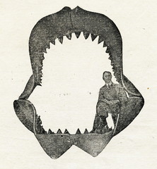 Jaws of megalodon (reconstruction by Bashford Dean, 1909)