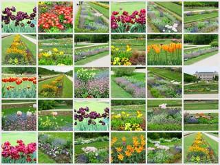 composition,florale plantations fleuries