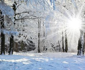 Christmas sunny morning