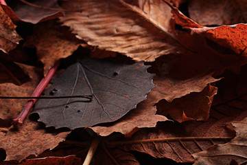 texture fallen leaves autumn macro