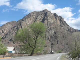 Дерево на фоне горы