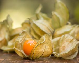 Physalis Früchte