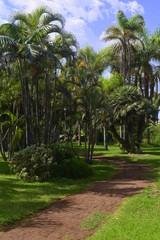 Palmeras en los jardines de Playa Jardín.Puerto de la Cruz