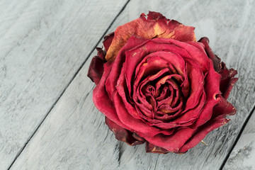 Dried flower of red rose