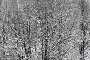 After snowfall in the park