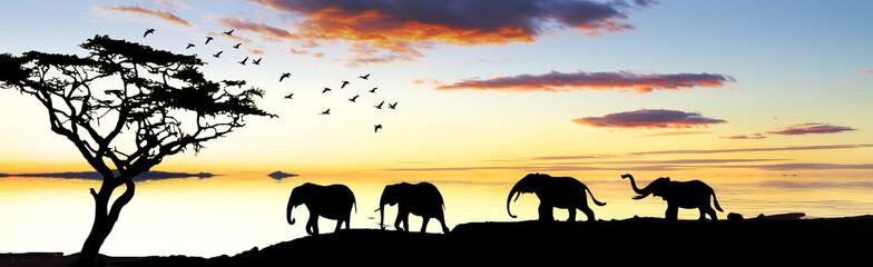 el desfile de los elefantes