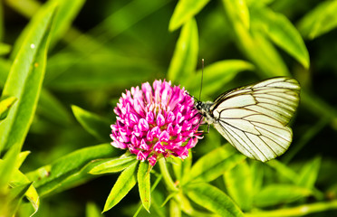 Butterfly on a purple mountain flower at forest