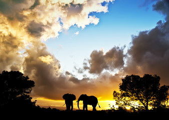 el dialogo de los elefantes