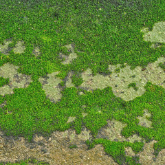Moss on ground, texture for background
