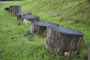 cut trees, tronchi tagliati