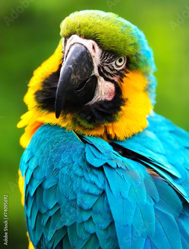 papuga ptaka