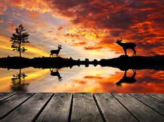 La llamada de los ciervos
