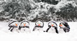 Little snowmen in a group - 74097223