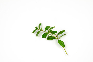 Lingonberry twig decoration