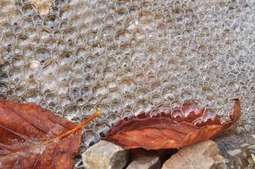 nature detail water foam