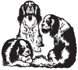 three spaniels black white