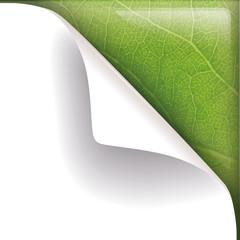 transparente gebogene Ecke Papier mit Pflanzenstruktur