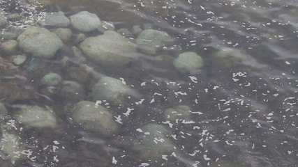 transparent water of North Barents Sea