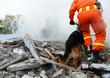 Leinwanddruck Bild - search and rescue