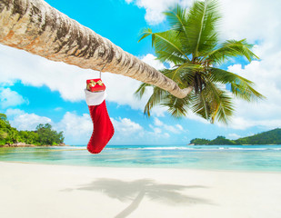 Christmas sock with gifts on palm tree at exotic tropical beach