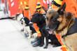 Leinwanddruck Bild - rescue dogs