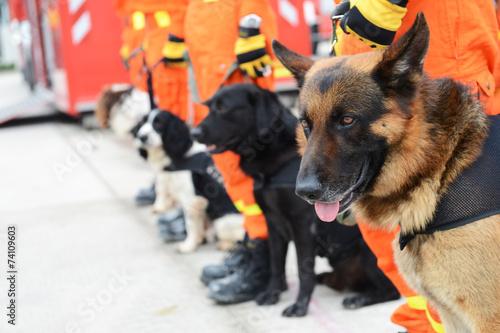 Leinwanddruck Bild rescue dogs