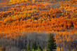 Sun flare over Aspen trees