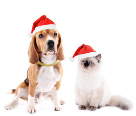 Cat and beagle dog with Santa Hat isolated on white
