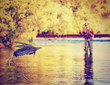 canvas print picture - a person fly fishing with a big trout in front