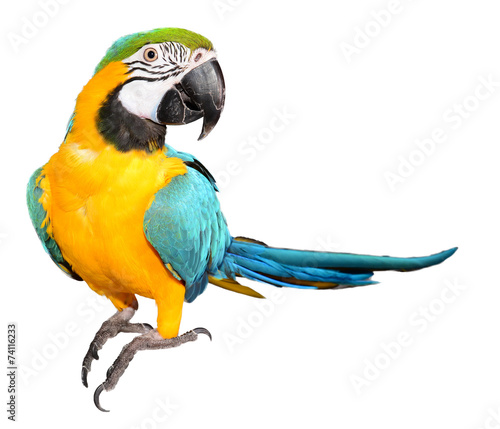 Deurstickers Vogel Blue and Gold Macaw